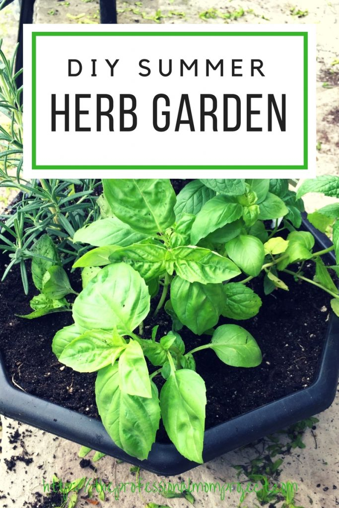How to Plant a Simple Herb Garden for Beginners